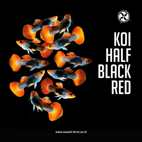 KOI HALF BLACK RED