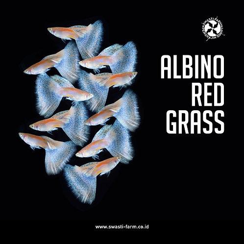 ALBINO RED GRASS