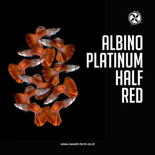 ALBINO PLATINUM HALF RED
