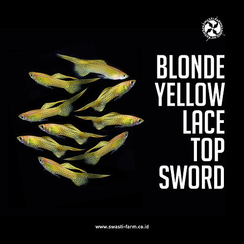 BLONDE YELLOW LACE TOP SWORD