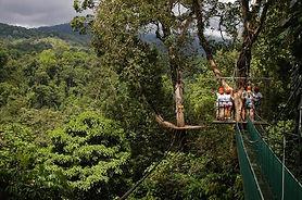 canopy-safari.jpg