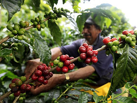 coffee-landov-16764161_h15046979_custom-