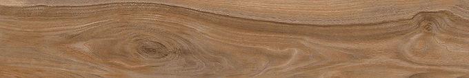 Cassia Golden Oak