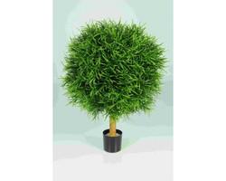 Podocarpus Ball 70cm €121