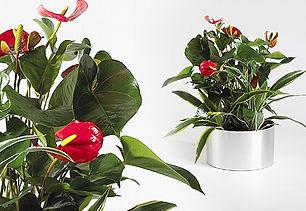 Artficial Plant | Desktop Arrangement