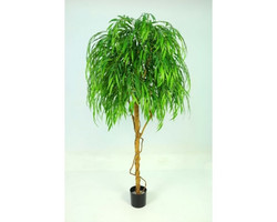 Weeping Willow 6ft €195