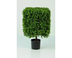 Boxwood Cube 1.5ft €65