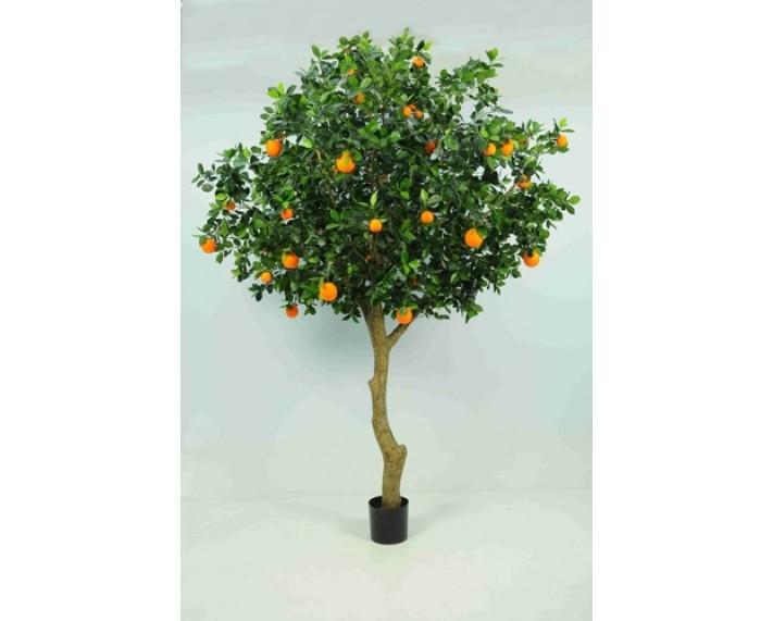 Golden Orange Tree 8ft €110