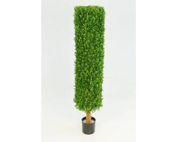Boxwood Cylinder 4.5ft €143