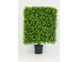Boxwood Cube 65cm €210