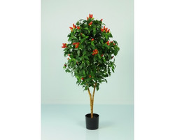 Pepper Tree 3ft €25