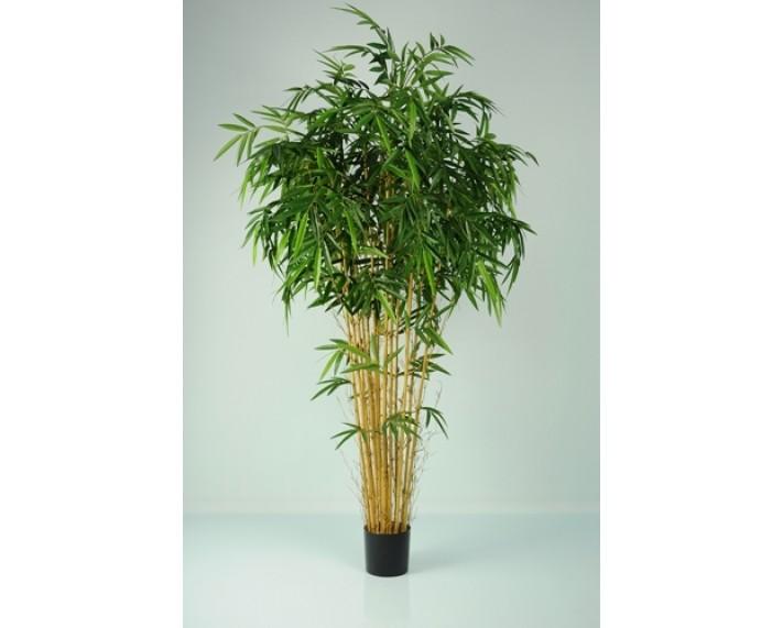 Bamboo Natural 6ft €195