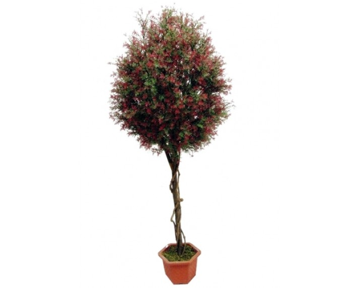 Midge Grass Tree 5ft €66