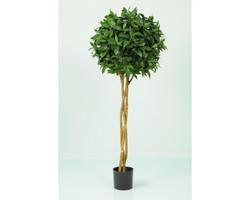 Sweet Bay Braid Tree 4ft €116