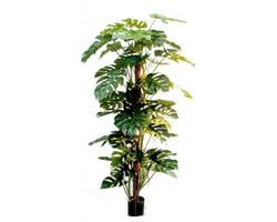 Slim Croton Multi Tree 4ft €135