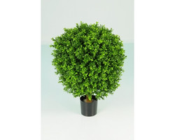 Boxwood Oval Ball in Pot 50cm €99
