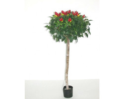 Pepper_Topiary_5ft_€55.jpg