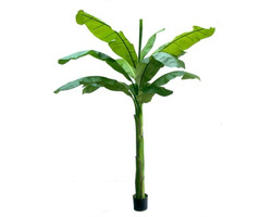 Banana Tree 9ft €275