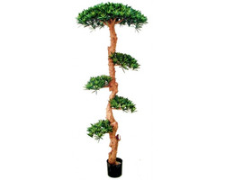 Bonsai Wood Tree 5ft €220