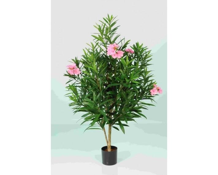 Oleander Body Tree 3ft €195