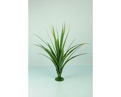 Pandanus Base Plant 140cm €89