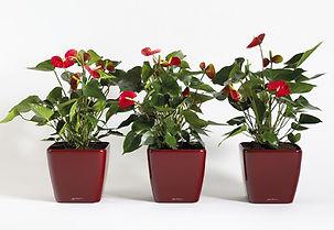 Artficial Plant | Anthurium Flamingo Plant