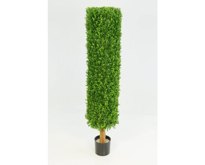 Boxwood Cylinder 3.5ft €121