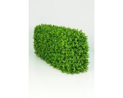 Boxwood Hedge Median €220