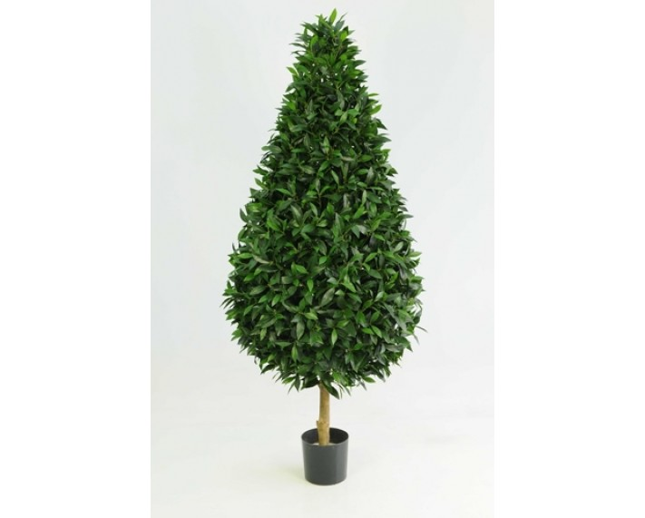 Sweet Bay Tree 3.5ft €165