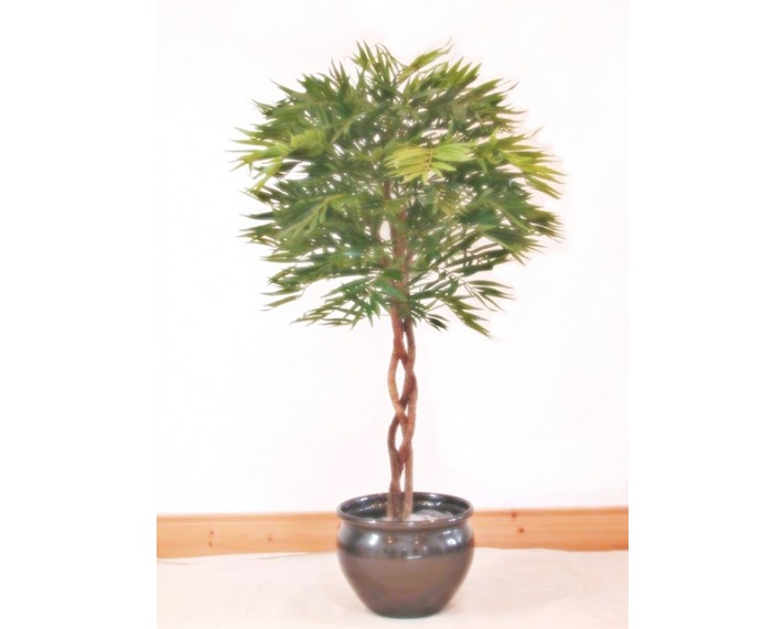 Parlour Palm Topiary 4ft €95