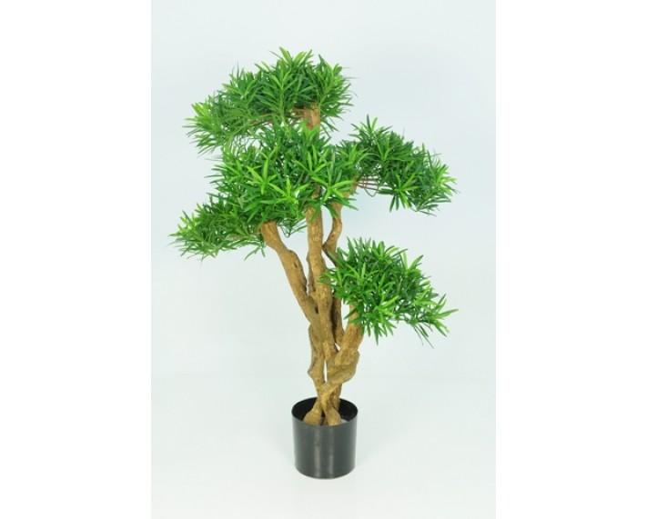Podocarpus Tree 3ft €175