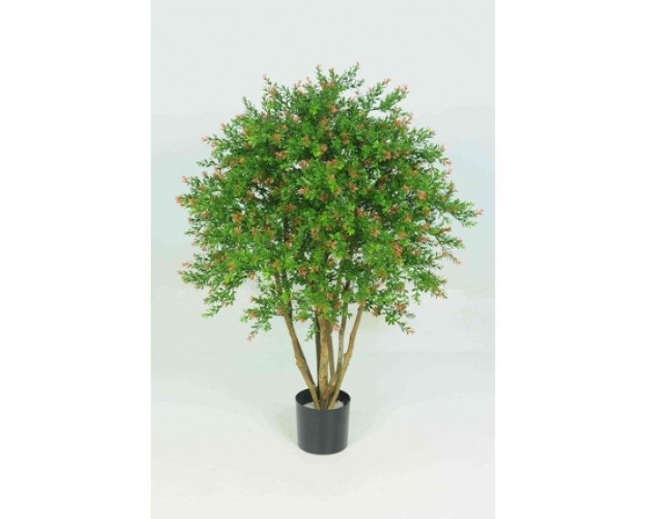 Red Day Leaf Tree 3ft €127