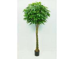 Pachira Braid Tree 7ft €275