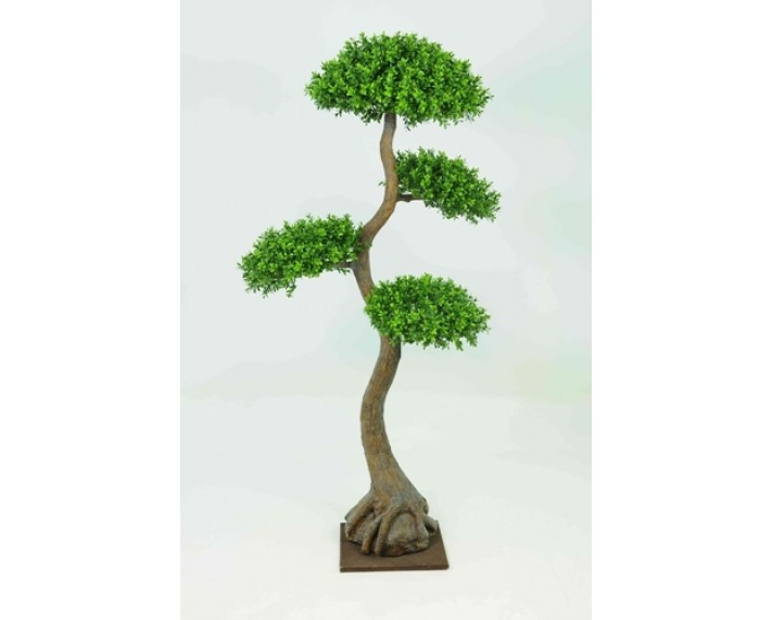 Boxwood Tree X 4 Heads 5ft €295