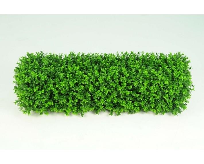 Boxwood Hedge Small €110