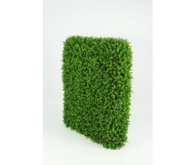 Boxwood Hedge Large €249