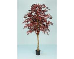 Japanese Maple 7ft €220