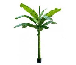 Banana Tree 7ft €220