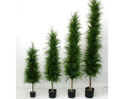 Needle Pine 4ft €22