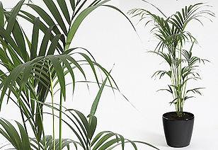 Artificial Plant | Kentia Palm