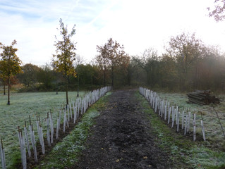 New Hedgerow in Chigwell Meadows