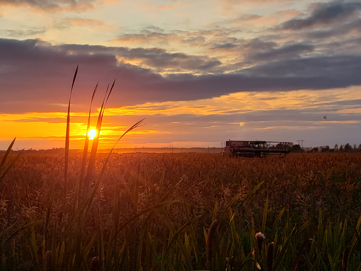 Wild Rice: Leojean Schuh