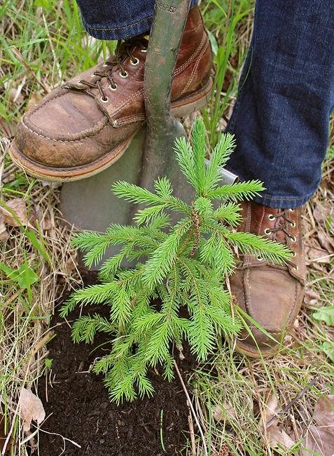 TreePlantingSmall.jpg