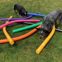 Hundephysio für Zuhause