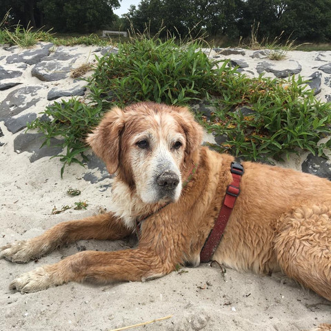 Murphy - toller Sporthund in Rente