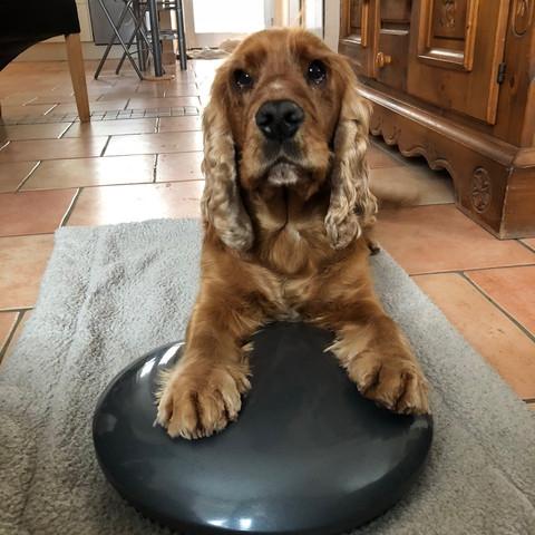 Pino - noch ein Hund mit viel Herz