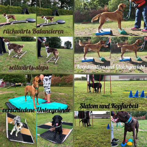 Physiotraining mit Junghunden