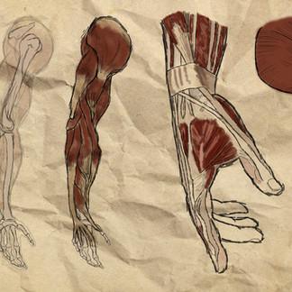 Project Cyborg: Arm Study