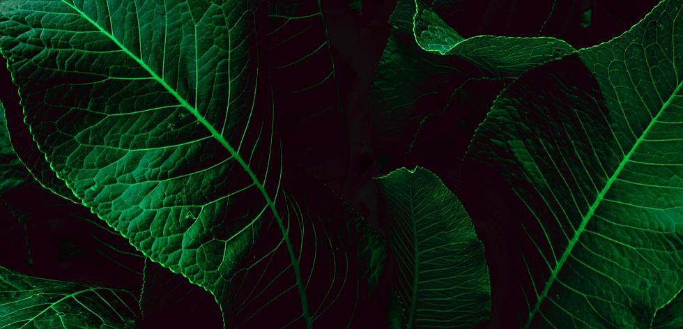 leaf image.PNG
