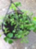 Baskets_4-copy.jpg